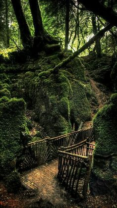 Puzzlewood Forest...England..loved and cared for by fine folks.