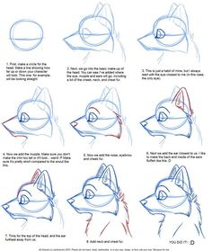 Drawing_Canine Profile