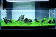 Iwagumi Green Aqua - Showroom, via Flickr.
