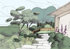 Landscape sketch of a garden - Architectural drawing / rendering / diagram