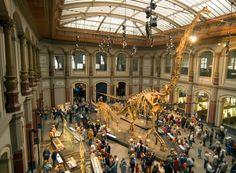 Museum für Naturkunde Berlin - Saurierwelt, Mineralien, Sonnensysteme und Co