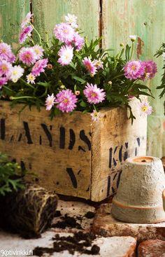 Kukkalaatikko laudoista   Kotivinkki Planting Flowers, Burlap, Planter Pots, Anna, Reusable Tote Bags, Cottage, Spaces, Country, Garden