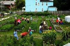 Destruction at Linwood Place Community Garden Date: August 19, 2013 - The Utica Phoenix
