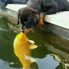 Dogfishkiss