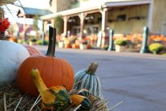 Fall Decorations at The Island in Pigeon Forge