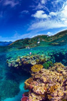 Great Barrier Reef, Queensland, Australia by Scott Sporleder. The Great Barrier Reef is the world's largest organically formed structure.