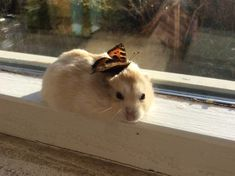 ALERT: a real butterfly is perched on a real hamster.https://ift.tt/2Mxax3e