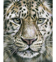Realistic Animal Pencil Drawings Animal Pencil Drawings - Stunning drawings of endangered wild animals by richard symonds