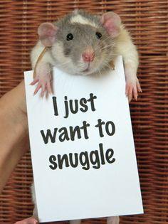 ¡No juzgues a una rata por su reputación, porque estos bombones sólo quieren ser tu mejor amigo!