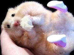 Chubby little hamster makes me smile