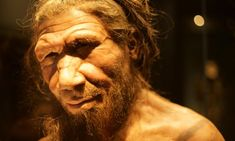 """The face of a modern human is almost uniquely flat and extraordinarily expressive. But our remarkable faces may not be as """"modern"""" as we think --- A reconstruction of a Neanderthal face, with a large brow ridge (Credit: Richard Gray) Natural World, Natural History, Brain Size, Body Study, Evolutionary Biology, Human Evolution, Big Animals, Like Image, Body Size"""