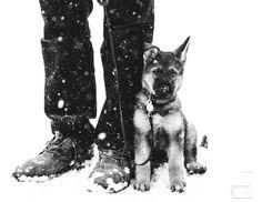"""GermanShepherdPuppy"" by kmoraru! Find more inspiring images at ViewBug - the world's most rewarding photo community. http://www.viewbug.com/photo/57718621"