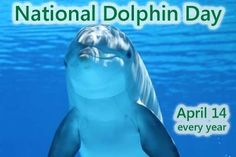 Happy National Dolphin Day!! Did you know there are about 40 species of dolphins, including Killer whales! Yes the big mean Orcas are just big misunderstood dolphins. They are top dog in every ocean ecosystem, despite being dressed in silly panda suits. #LOL #DidYouKnow #NowYouDo #DependableRooter #DRP #SanJosePlumbing #NationalDolphinDay #itsagreatday