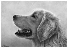 Golden Retriever perro lindo retrato Animal cachorro dulce