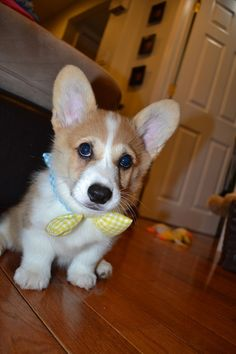 Of course I show favoritism to corgis.. but this is too cute!