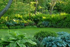 Beautiful depth of planting and variation of leaf form and texture in a garden in Portland, ME, designed by James McCain. Description from pinterest.com. I searched for this on bing.com/images