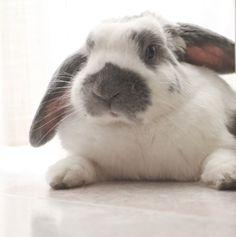 coniglio, rabbit