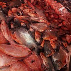 Mojarra o Cachama Frita ? 🤔 No esperes mas, el mejor pescado al mejor precio.✔ Nos Encontramos Bodega 11 local -02  Mayor Inf 3164731851 - 3174478452 🦀🐋🐬🐟🐟🐬🐋🦀🦀🐋🐬🐟🐟🐬🐋🦀 #Pescado #CocinaPremium #Importador #Mayorista #Bucaramanga #DelMar #DelRio #Cocina #sandiegoconnection #sdlocals #delmarlocals - posted by DisPes https://www.instagram.com/dispezblm. See more post on Del Mar at http://delmarlocals.com