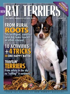 rat terrier things | Rat Terrier Life Span