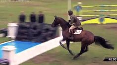 Perfection! horse gif | Tumblr