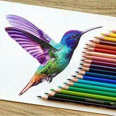 Beija flor pintura desenho
