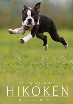 飛行犬  http://hikoken-chiba.com/