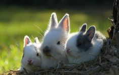 A day in the sun - 50 Cute Bunny Pictures  <3 <3