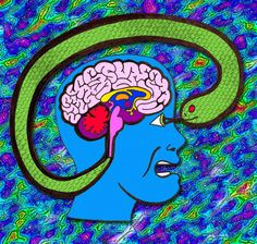 How to By-Pass Your Reptilian Brain and Restore Your Creative Power