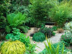 Gravel Garden Features Bamboo for Height and Color Japanese Garden Plants, Japanese Garden Design, Japanese Gardens, Garden Hedges, Gravel Garden, Outdoor Garden Bench, Outdoor Gardens, Bamboo Landscape, Foliage Plants
