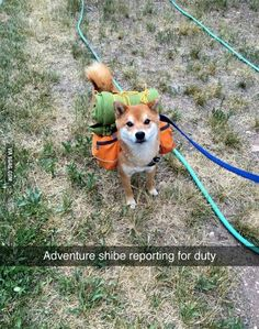 Doge ready for adventure! - 9GAG