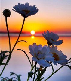 Beautiful Flowers Wallpapers, Beautiful Nature Wallpaper, Beautiful Sunset, Beautiful Landscapes, Beautiful Images, Sunset Photography, Landscape Photography, Image Nature, Flower Wallpaper