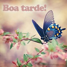 Boa tarde acompanhado de flores e uma borboleta azul
