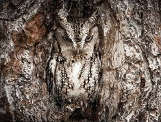 Master of Disquise by Graham McGeorge - Pixdaus