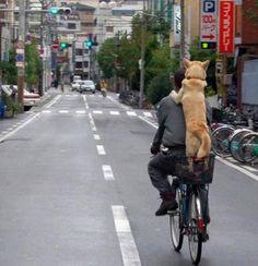 ...e pedalando la fatica non si sente.