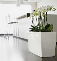 that flower box is a must......on white on white. Love it ♥