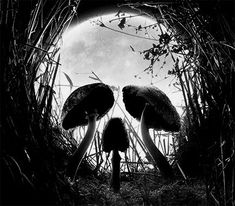 mushrooms skull illusion