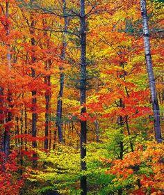 Bright fall foliage, autumn in New Hampshire