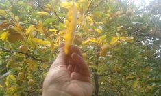 Bahar bahce bir yanimiz bir yanimiz yaprak doker