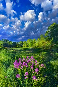 Wisconsin Landscape - USA