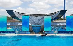The USDA Cites SeaWorld for Putting Safety of Animals at Risk  http://www.ecorazzi.com/2014/02/25/the-usda-cites-seaworld-for-putting-safety-of-animals-at-risk/