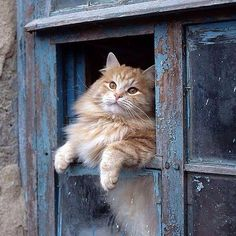 Rustic country window with gorgeous cat