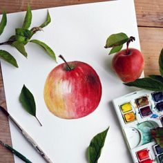 Learn how to paint a watercolor apple with a step by step picture tutorial to guide you.  http://www.pinterest.com/source/craftgawker.com/ Watercolor Projects, Watercolour Tutorials, Watercolor Art, Watercolor Techniques, Painting Techniques, Painting Tips, Painting Lessons, Art Lessons, Painting & Drawing