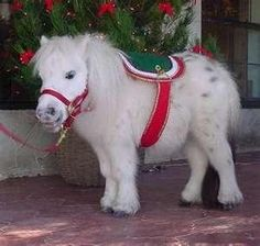 Not a pony but a mini horse, even cuter! Pretty Horses, Horse Love, Beautiful Horses, Animals Beautiful, Horse Photos, Horse Pictures, Animal Pictures, Cute Baby Animals, Animals And Pets