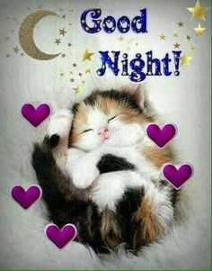 Good night sister and yours, sweet dreams 😋🌜💘🌛🌜☝🌛💖. Good Night Cat, Good Night Sister, Good Night Sleep Tight, Good Night Prayer, Cute Good Night, Good Night Friends, Good Night Blessings, Good Night Sweet Dreams, Evening Greetings