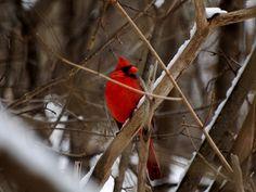 Mr Pretty Bird