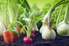 Grow These Plants Side-By-Side For A Thriving Garden - Companion Planting Helps Garden Vegetables Grow – Simplemost - When To Plant Vegetables, Planting Vegetables, Growing Vegetables, Vegetable Gardening, Edible Plants, Edible Garden, Gardening For Beginners, Gardening Tips, Small Herb Gardens