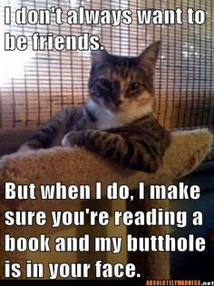 I don't always want to be friends. But when I do, I make sure you're reading a book and my butt hole is in your face.