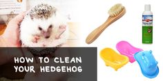 This is a guide on how to clean your How to Clean Your Hedgehog: Best Hedgehog Bathing Brushes - Hedgehogged Guinea Pig Toys, Guinea Pigs, Hedgehog Bath, Hedgehog Supplies, Homemade Cat Toys, Class Pet, Pet Shampoo, Bath Brushes, Little Pets