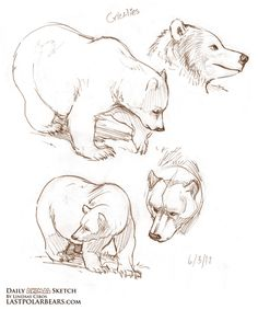 Lindsay Cibos' Art Blog: Daily Animal Sketch – Grizzlies and Polar Bears