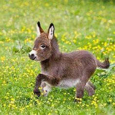 Romping baby donkey